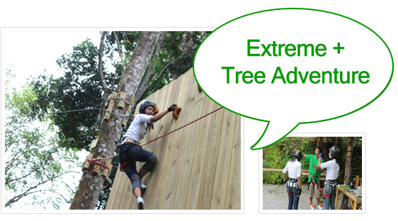 Extreme and Tree Adventure