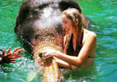 Big Animal Love Affair Elephants and Dolphins
