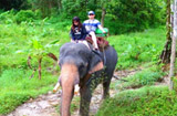 Tour Phuket for Guest from Cruise Ships