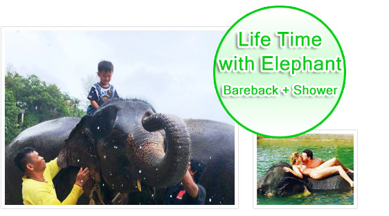 Life Time with Elephant Barback and Shower