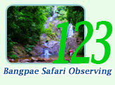 Bang-Pae Safari Observing